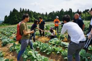 安井ファームさんの畑で野菜の収穫