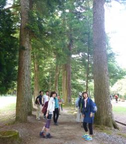 立山寺の栂並木を歩く