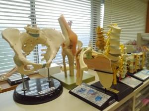ケガ、腰痛などの整形外科専門
