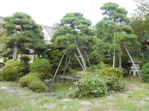 医院内から見える広い庭