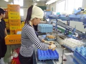 集卵所で仕分けるベトナム人の従業員さん