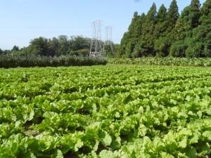 広い畑で何種類もの野菜を作っている
