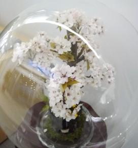 玄関にある桜のドーム