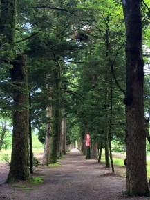 眼目の寺の栂並木