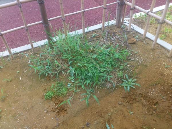 お庭の草たち