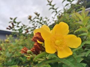 事務所前に咲いていた花
