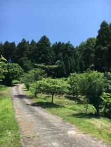 青空に緑が映えるとってもいい天気