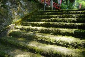 苔むした階段に注がれる木漏れ日