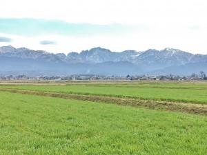田んぼの向こうに見えるのは剱岳