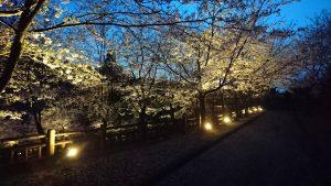 大岩親水公園(写真提供:種井誠さん)