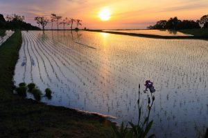 滑川市大浦からの夕陽(撮影:内山修さん)