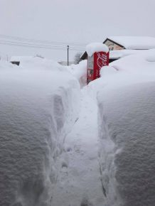 雪をかきわけた先の自販機(撮影:つるぎの味蔵 山下絵里さん)