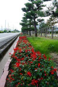 工場敷地内道路脇の花壇